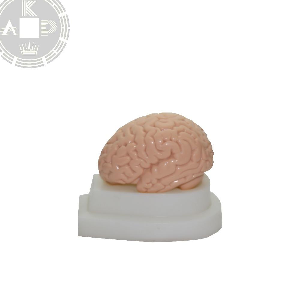 Plastic Anatomical Brain Models, Plastic Anatomical Brain Models ...
