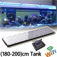 Dsuny Weeping Moss- Fish Tank Low Light Live Aquarium Plant ...
