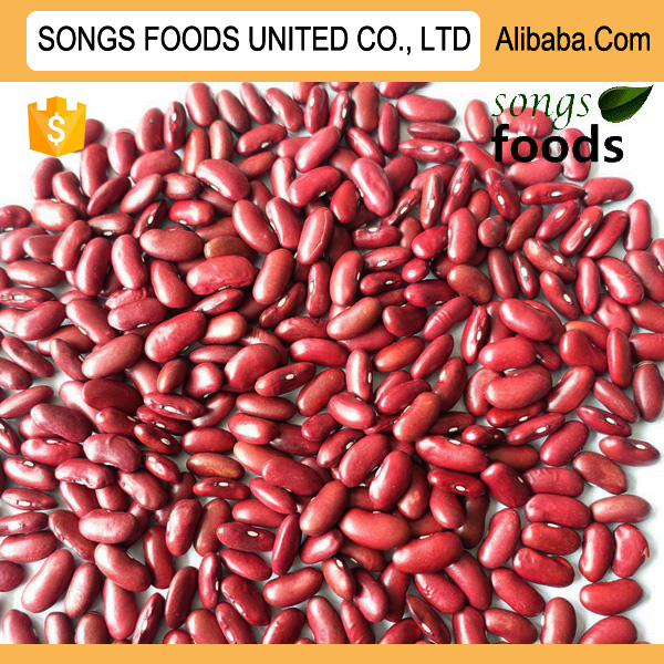 Export Egyptian Dark Red Kideny Beans