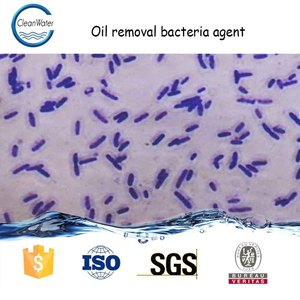 Oil removal bacteria agent river waste water treatment