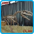 Life Size Dinosaur Fossil for dinosaur exhibition