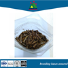 edible protein food grasshopper insect locust flour