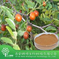 Natural Ziziphus Jujuba Extract triterpene saponins 95% powdered Ziziphus Jujuba Extract 95% From Gmp Manufacturer