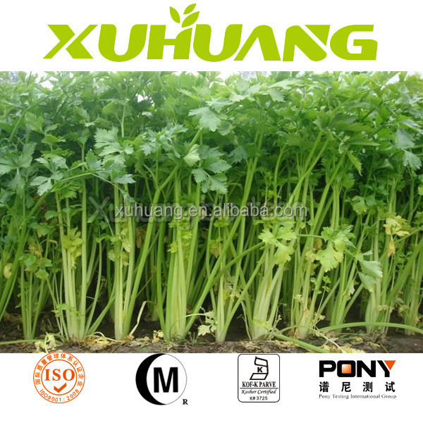 high quality celery seed extract/Celery Leaf P.E.Celery Seed Extract Powder