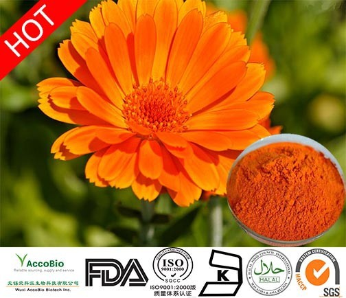 Natural Marigold Flower extract Lutein 20%, Pure Zeaxanthin 40% 20%, Calendula officinalis flower extract Lutein powder