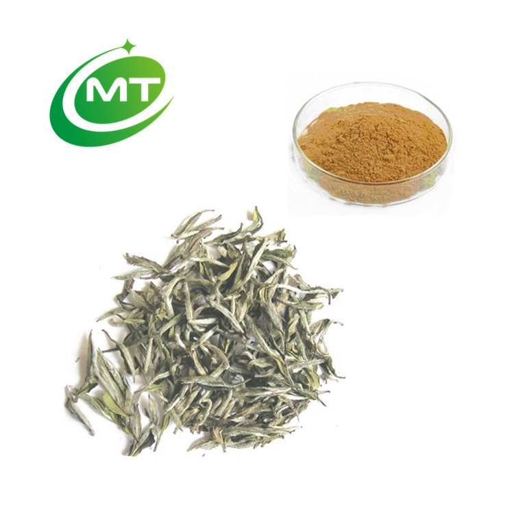 Free sample low PAHs White Tea Extract - 4uTea | 4uTea.com