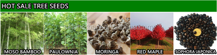 2021 Top Quality Wood Seed Of Dalbergia Tonkinensis For Sowing