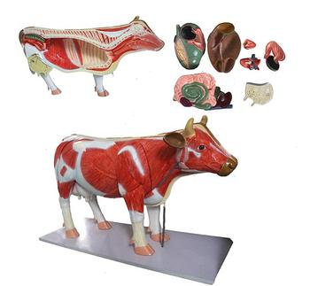 Animal Acupuncture Model,Dog Cat Horse Cow Animal Skeleton Anatomy ...