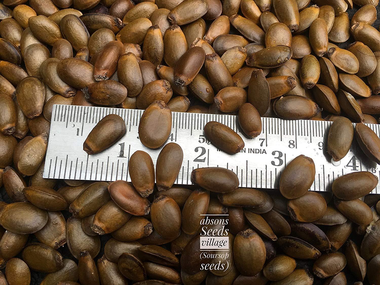 Soursop Graviola Annona Muricata Guyabano tree seeds for growing (25 seeds pack )