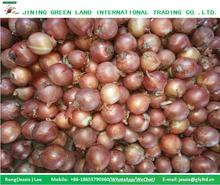 GOOD QUALITY LOW PRICE ONION FROM CHINA HOT SALE
