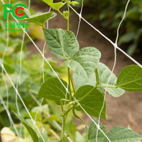 China Factory Supply Trellis Net Climbing Plants Supporting Net
