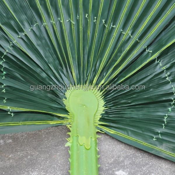 Fotos de palmas secas 20