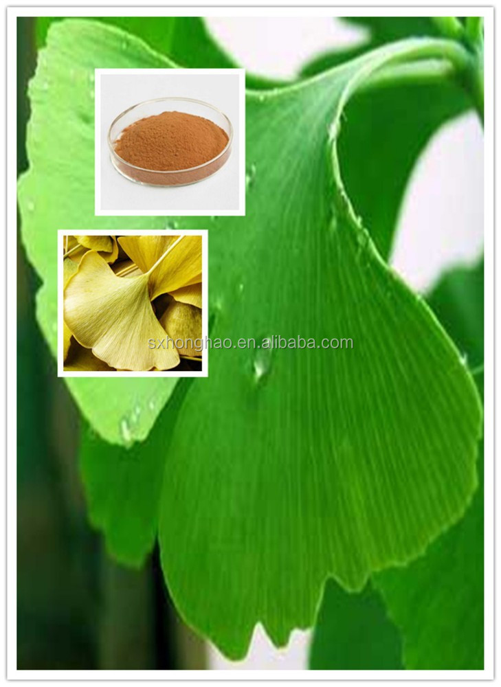 Free Sample For Gingko Extract With 24% Flavones glycosides HPLC