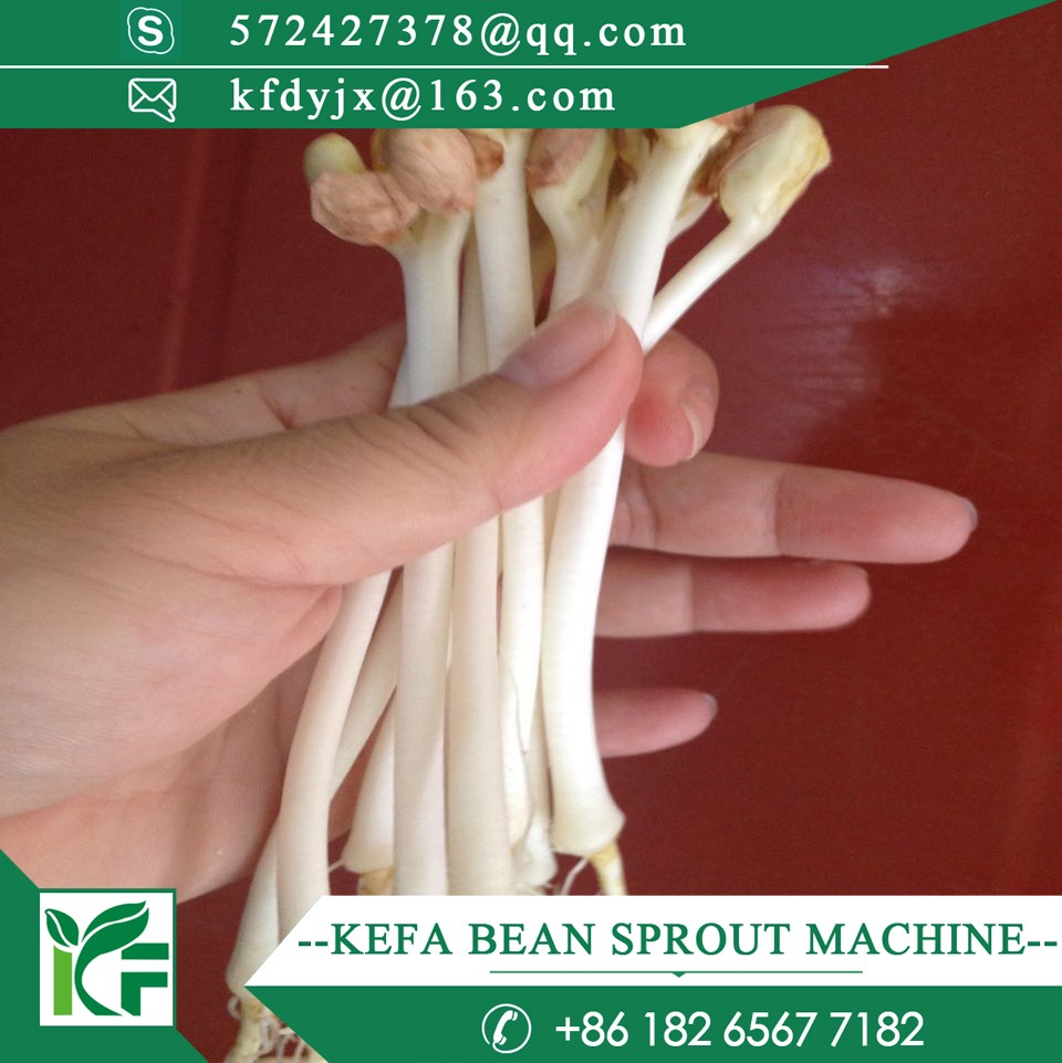 cost saving automatic peanut sprouts growing machine / mung bean sprouting machine / pea sprout machine