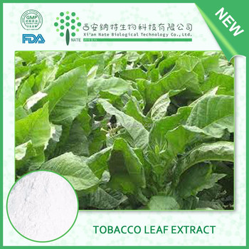 Wholesale Natural Pure Tobacco Leaf Extract Solanesol 98% With Free Sample  - Buy Tobacco Leaf Extract,Tobacco Leaf,Organic Tobacco Leaf Extract