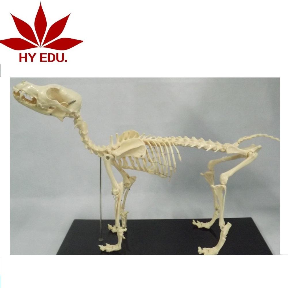 Catálogo de fabricantes de Esqueleto Perro de alta calidad y ...