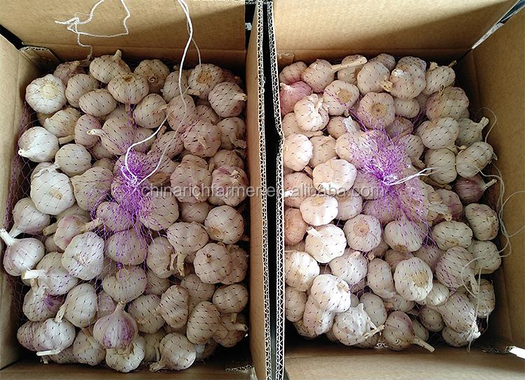 중국 자연적인 마늘 신선한 마늘