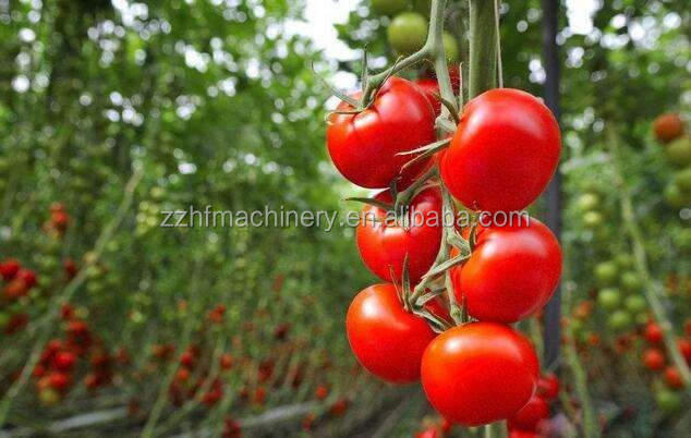 Large Size China Industrial Tomato Greenhouses - Buy Tomato  Greenhouse,Industrial Greenhouse,China Greenhouse Product on Alibaba com