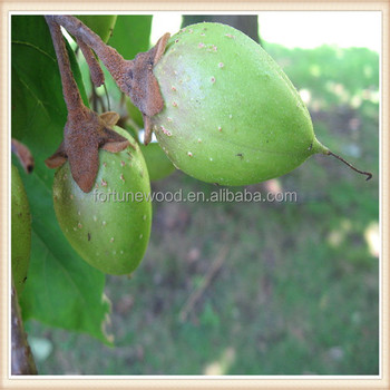 Seeds for planting top quality paulownia