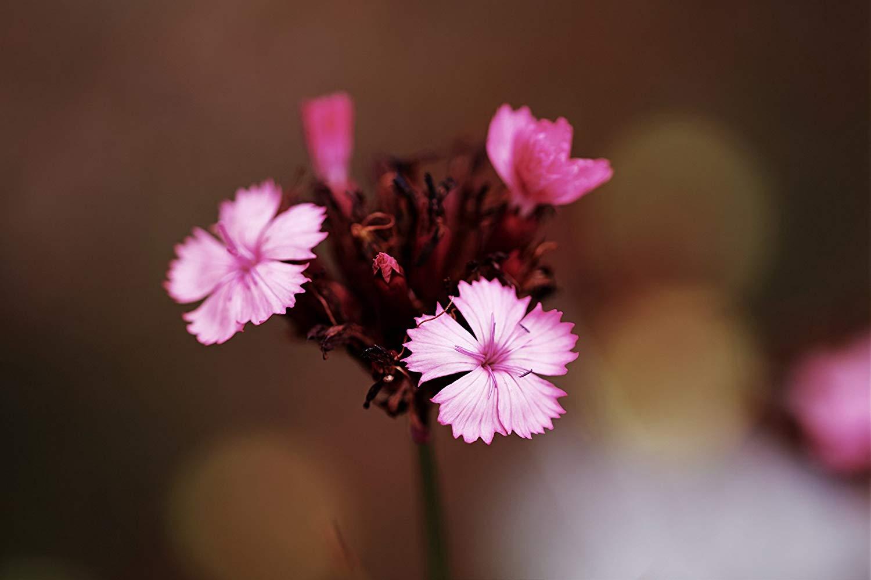Buy Petite Pink Flower Paper Print, Violet, Professional