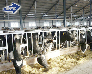 Dfx Galvanized Steel Structural Dairy Farm Shed