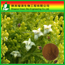 Best Selling Products/ Boswellin Extract/ Boswellia Serrata/ Boswellic Acid 65% Powder