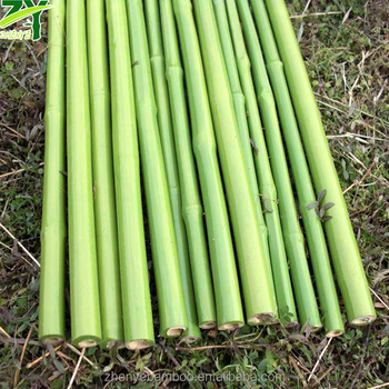 Nuevo Zy 1023 Palos De Bambu En Plastico Abrigo Postes De Bambu Con - Palos-de-bambu