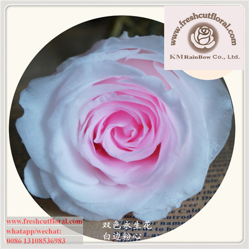 Providing Preserved Wholesale- Rose Flower Gift For Celebration Shipped All Seasons Immediately Delivery