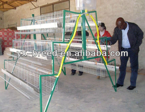 Kenya feeding and drinking automatic poultry cages