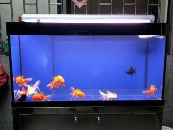 Persegi Panjang See Through Aquarium Akrilik Buy Upgrade Besar Atau Kecil Kaca Tangki Ikan Akuarium Upgrade Kaca Akuarium Kaca Persegi Tangki Ikan Product On Alibaba Com