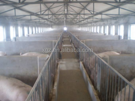 low price advanced automated piggery