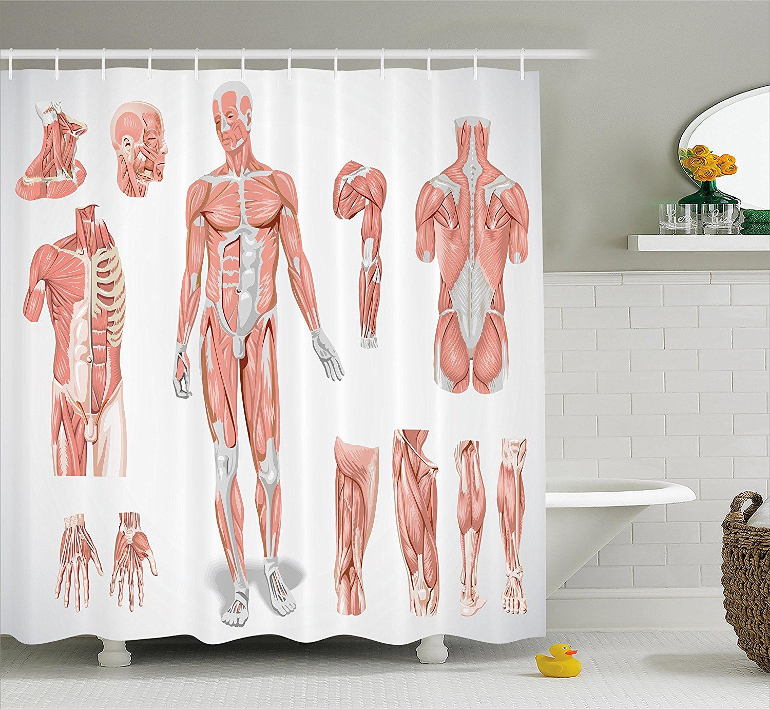 Coral Ambesonne Human Anatomy Shower Curtain Fabric Bathroom Decor Set with Hooks Male and Female Bodies with Inner Mass Build Display Muscle System Graphic Print