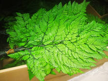 preserved green leaves preserved green fern for decorative leaves