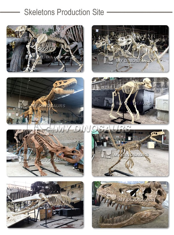 My Dino-C070 Artificial dinosaur skeleton fossil for sale