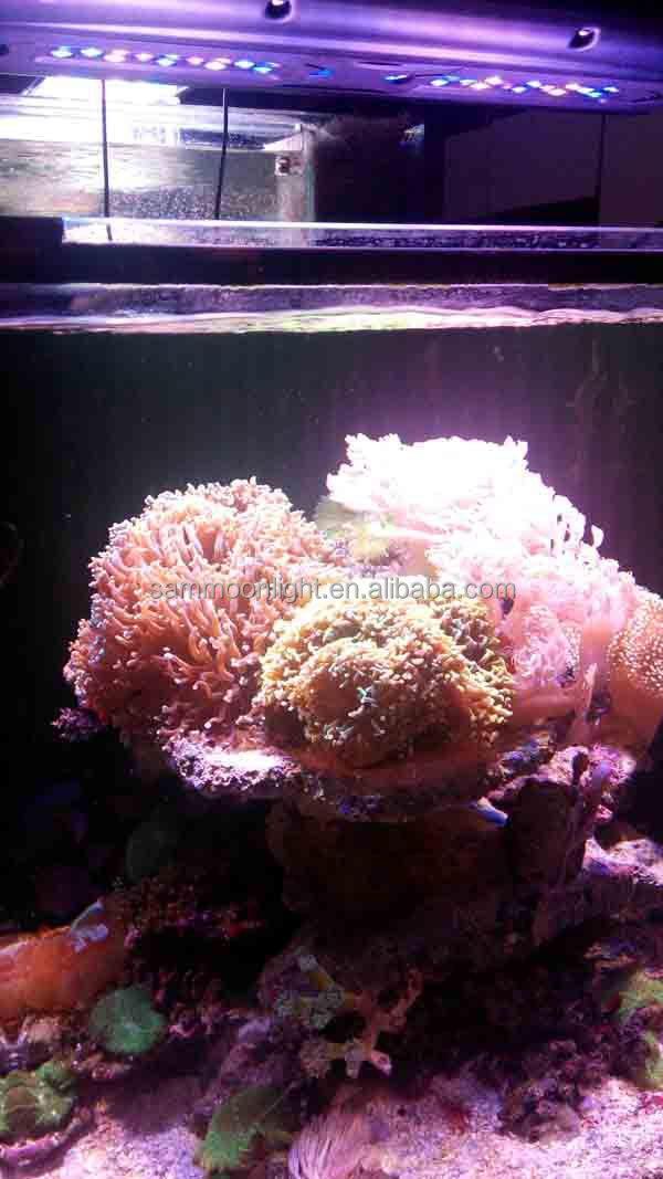 Bl120w Led Uv Diy Led Lighting Freshwater Aquarium Light Marine ...