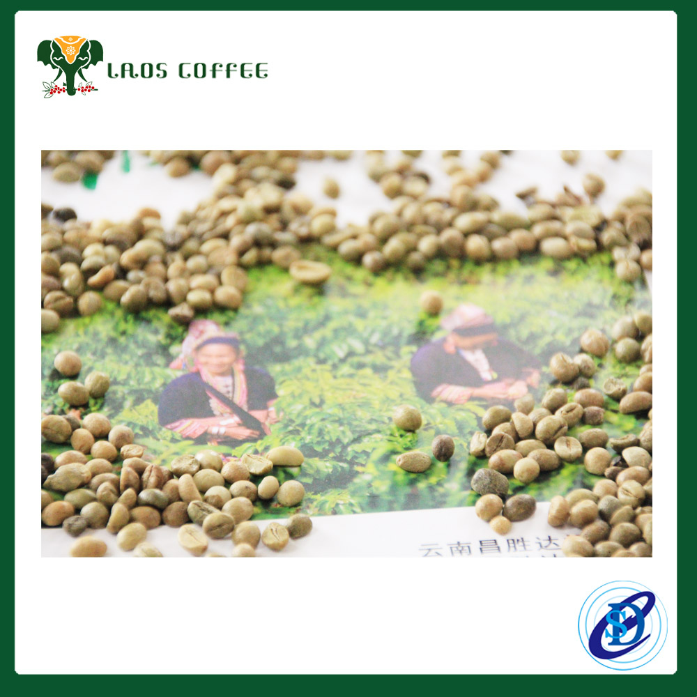 Green Robusta coffee beans Grade 2 Screen 13 Origin Vietnam