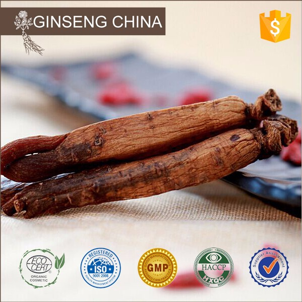 Free Sample Top Quality Korean Red Ginseng P.E.