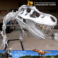 MY Dino-New products painted dinosaur skeleton T-REX