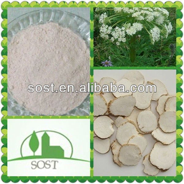 Factory Supply 100Percent Natural Radix Angelicae Sinensis