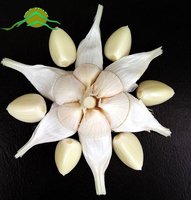 Factory price high quality good farmer fresh normal white garlic import price natural garlic for sale