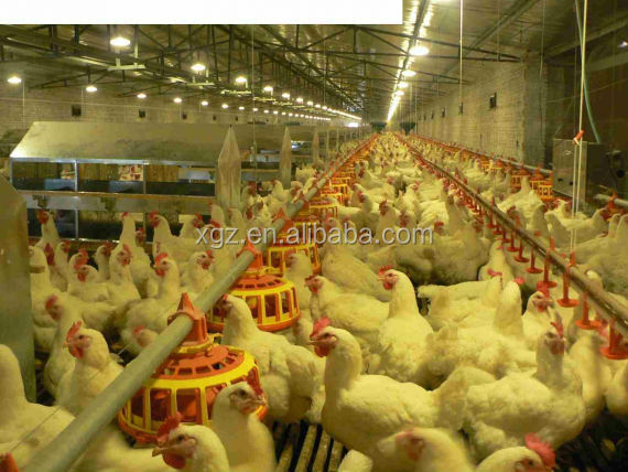 advanced modern automatic egg chicken house design for layers