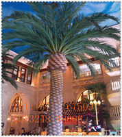 good quality plastic artificial canary date palm tree for outdoor landscape decoration