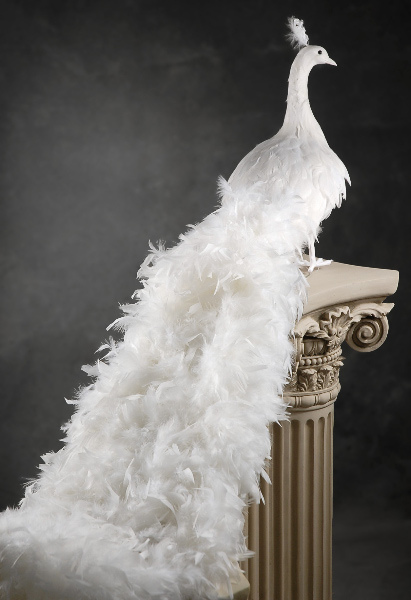 White Artificial Peacock With Curly Feathers 54inch Long