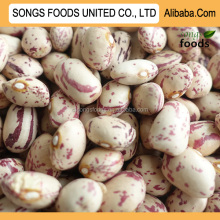 Hot sale New Crop Pinto Kdiney Beans