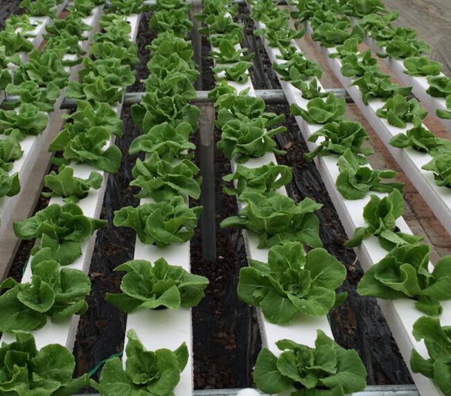 100x50mm China Aeroponic System Buy Aeroponic Gardening