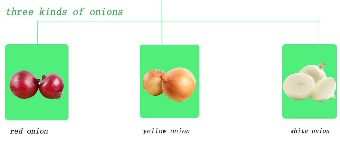 Fresh yellow Onion/Onions Exporter