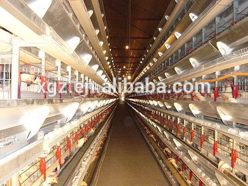 modern automated low price chicken hen houses