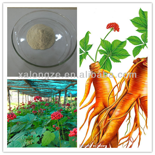 high quality Ginseng root extract natural powder healthy care
