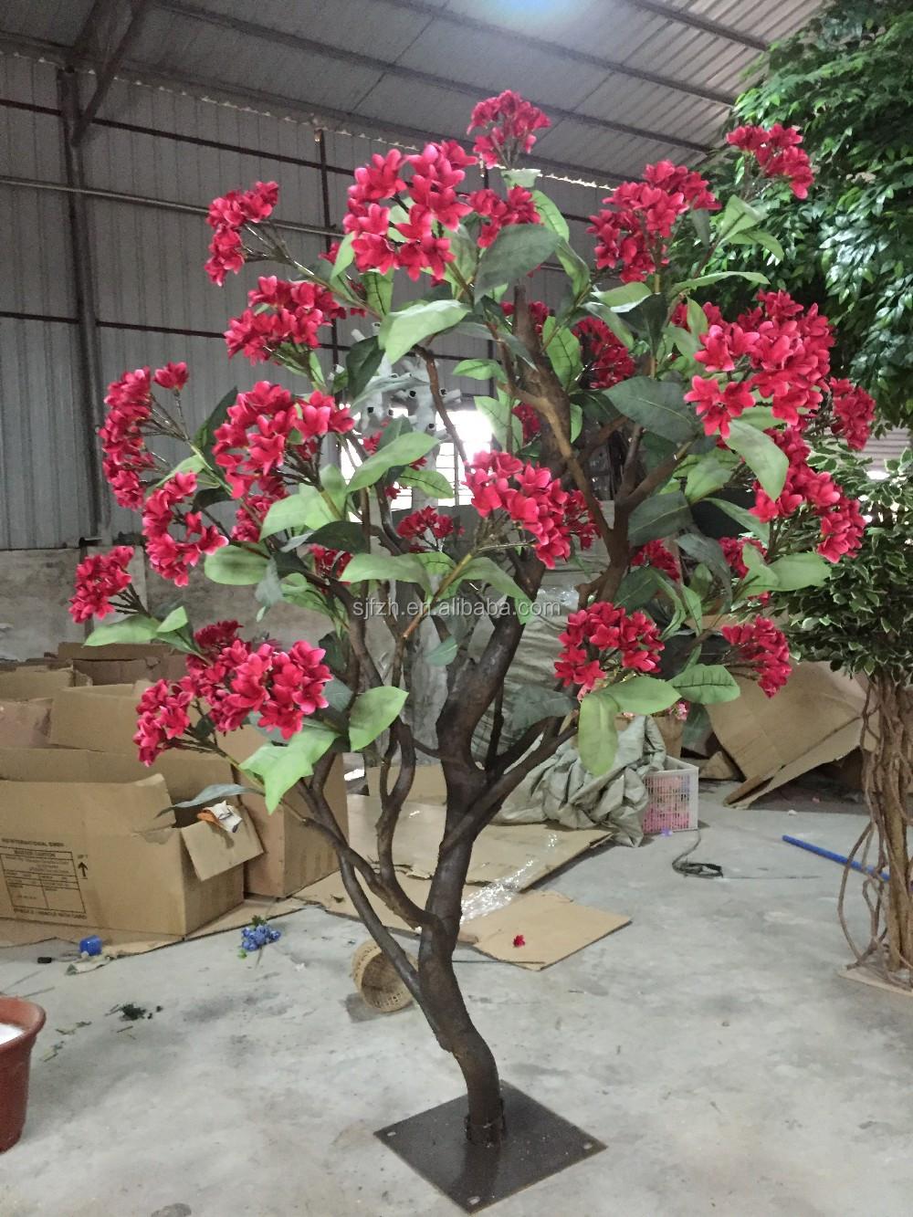 Plumeria Tree Beautiful Flowers