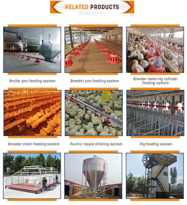 Automatic Poultry Equipment/chicken House Equipment/ Poultry House Complete  Farming System - Buy Automatic Feeding Equipment,Chicken Farming